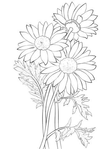Daisy Coloring Page From Daisy Category Select From 20946 Printable Crafts Of Cartoons N Printable Flower Coloring Pages Flower Coloring Pages Coloring Pages