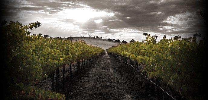 Saltram Estate winery