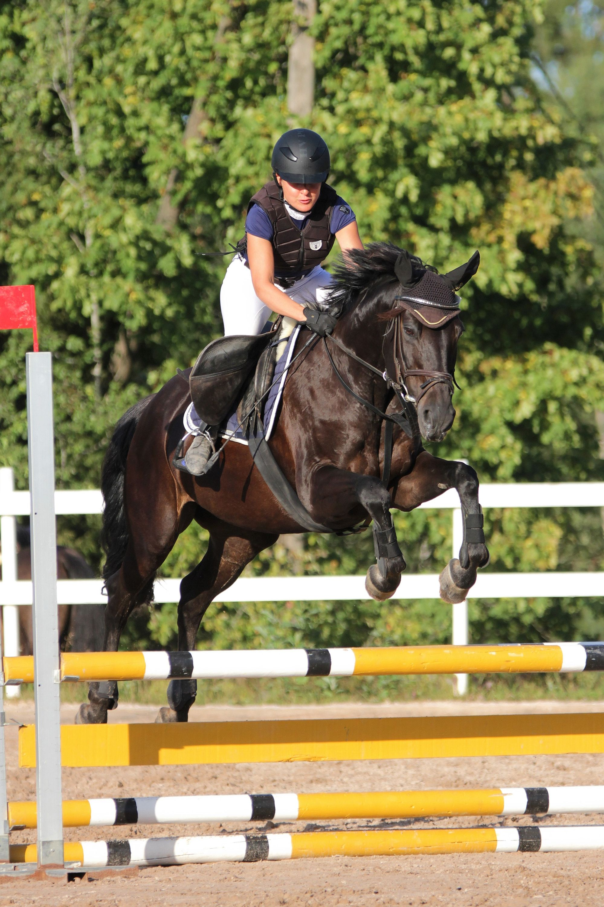 Researcher Identifies Lack of Risk Management in Horse