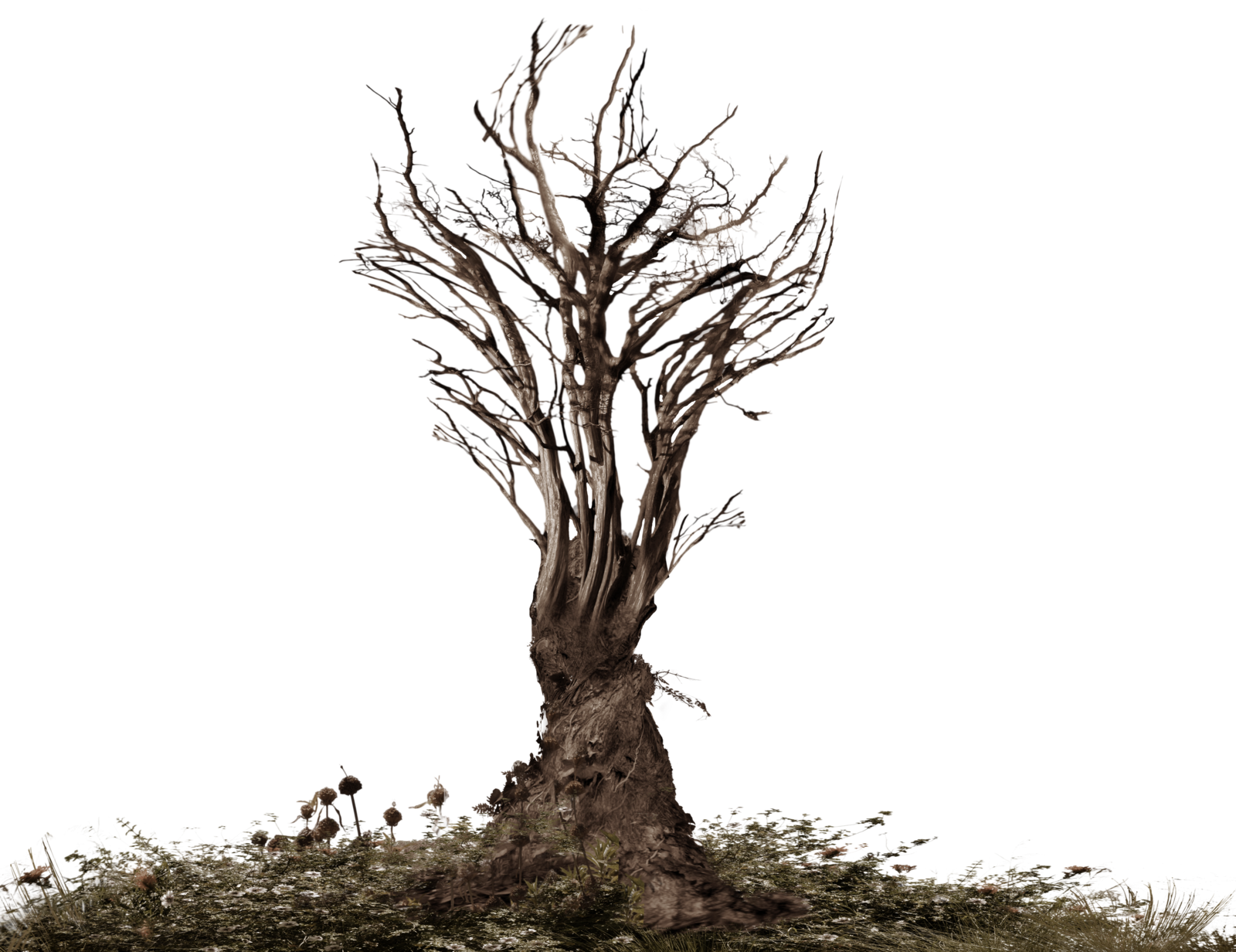 Http Img06 Deviantart Net Bce1 I 2014 246 A 5 Twisted Scary Tree Stock Photo Png By Annamae22 D7xu89j Png Tree Roots Flower Images Beautiful Tree