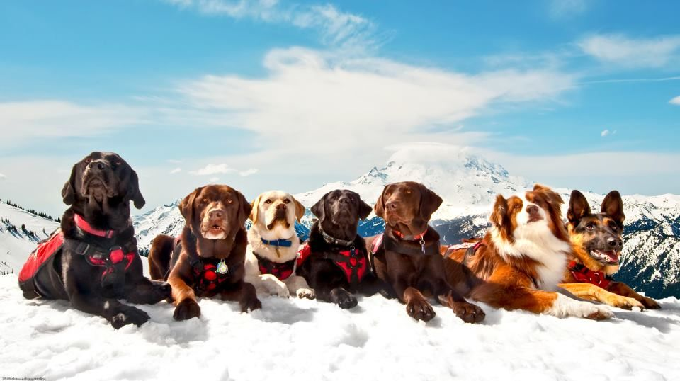 Weekly High Five Report Avalanche Rescue Dogs Dogs Rescue Dogs