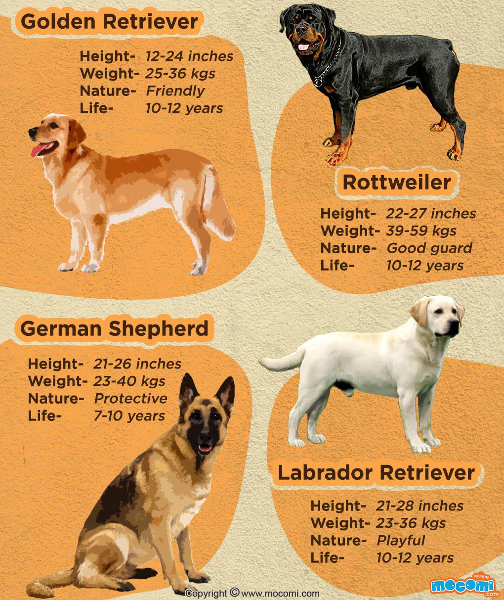 Types Of Dogs And Popular Dog Breeds General Knowledge Mocomi Kids Dog Breeds Dogs Popular Dog Breeds