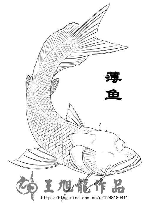 《山海经》描述:薄鱼,其状如鳣鱼而一目,其音如欧,见则天下大旱。 独眼鳣鱼