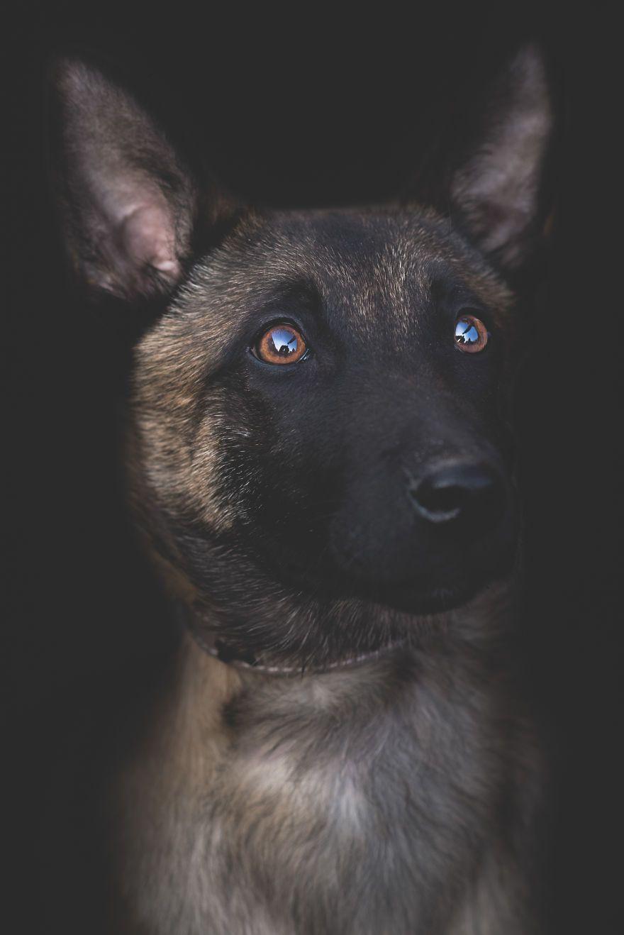 Pozrite sa, čo vznikne kombináciou lásky k zvieratám a fotografovaniu