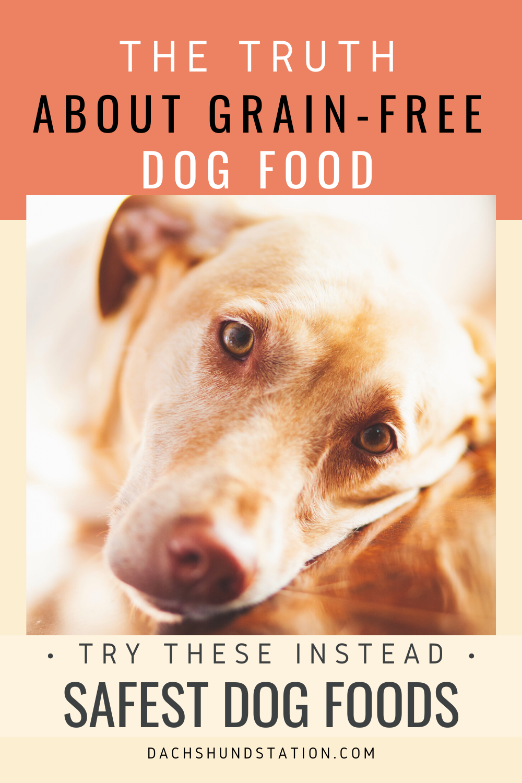 Grain Free Dog Food Linked To Heart Disease Dachshund Station Grain Free Dog Food Free Dog Food Grain Free Dog