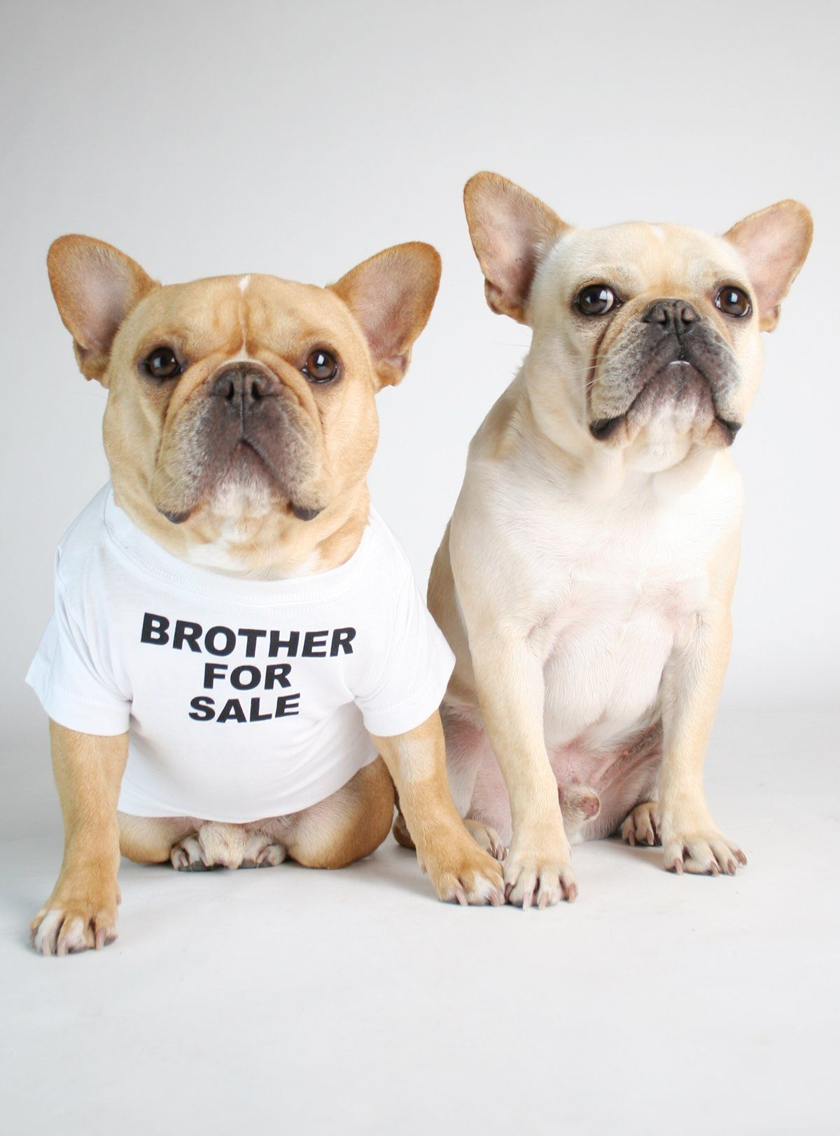 Brother For Sale Dog Tee French Bulldog Dog Shirt French