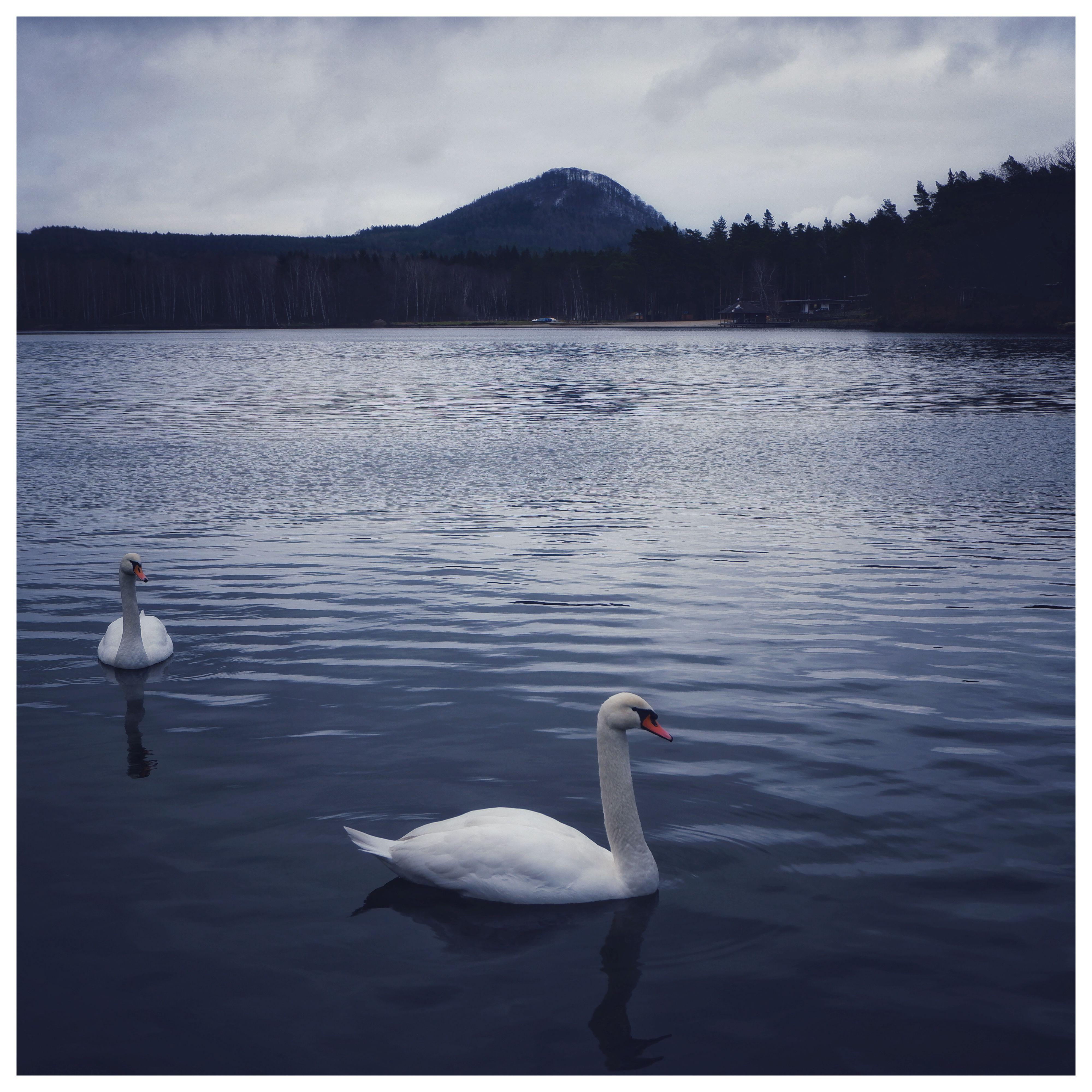 Swan Lake - Radvanecký Rybník A couple of swans on Radvanecký Rybník, you know chilling out and stuff.  #czechia #naturephotography #fujixt100 #ig_landscape #theworldshotz #landscapephotography