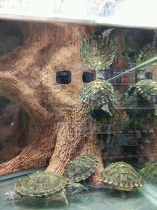Tank Full Of Red Eared Sliders Petco Petco Red Eared Slider Turtle