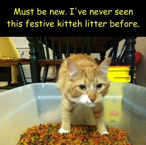 Litter Boxes and Their Myths | Pets | Litter box, Funny cats