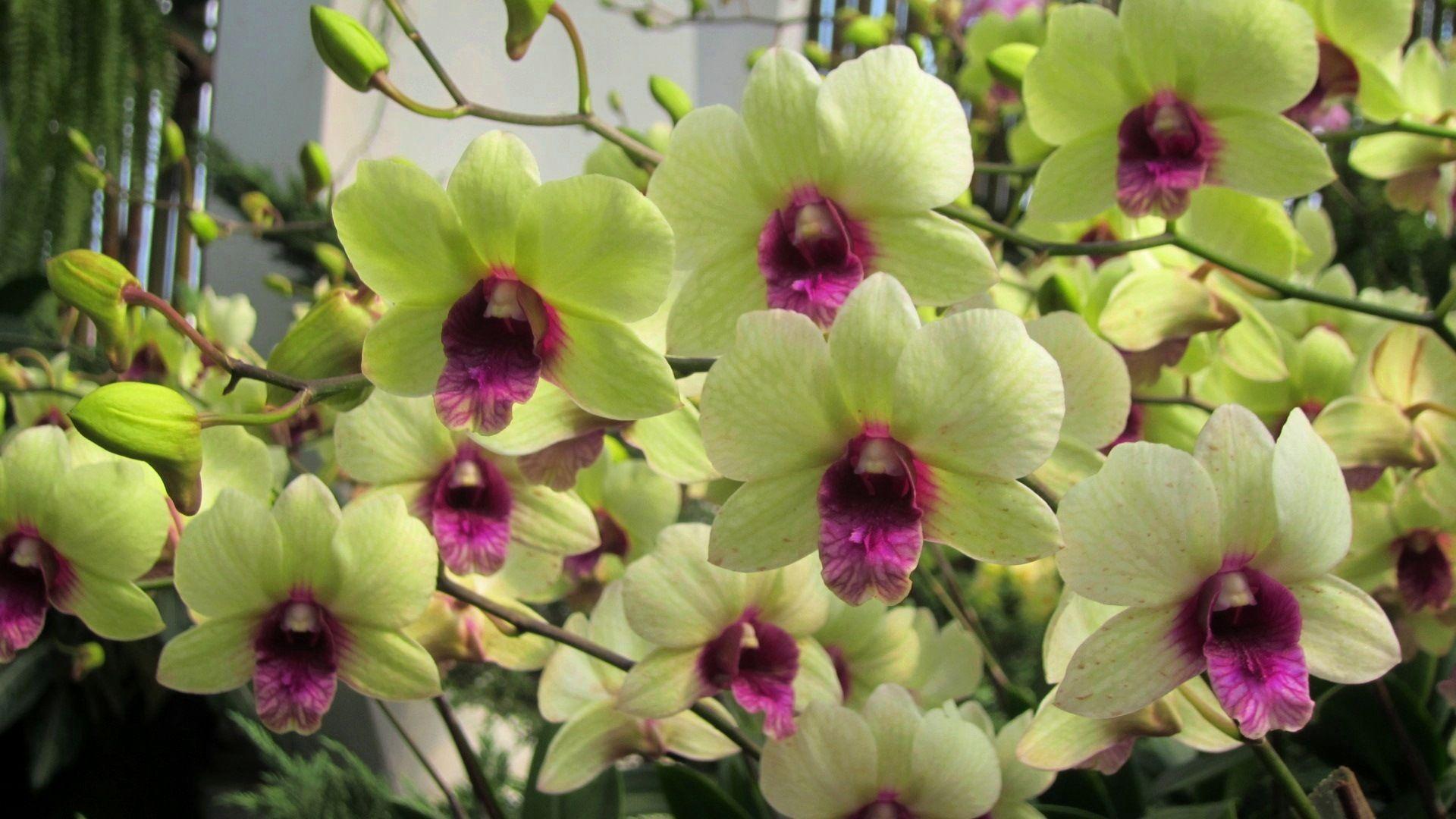 Pretty orchid lovely flower nature hd wallpaper plants pinterest