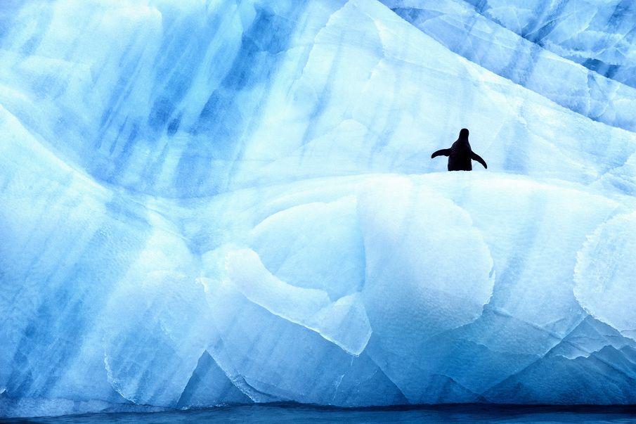 Antarctic Wildlife by Justin Hofman