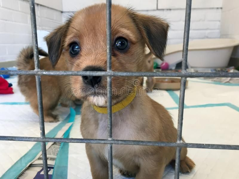 Puppy Dog At A Rescue Shelter In A Cage Puppy Dog At A Rescue Shelter Waiting T Aff Rescue Shelter Puppy Dog Ado Puppies Dogs Dog Rescue Shelters