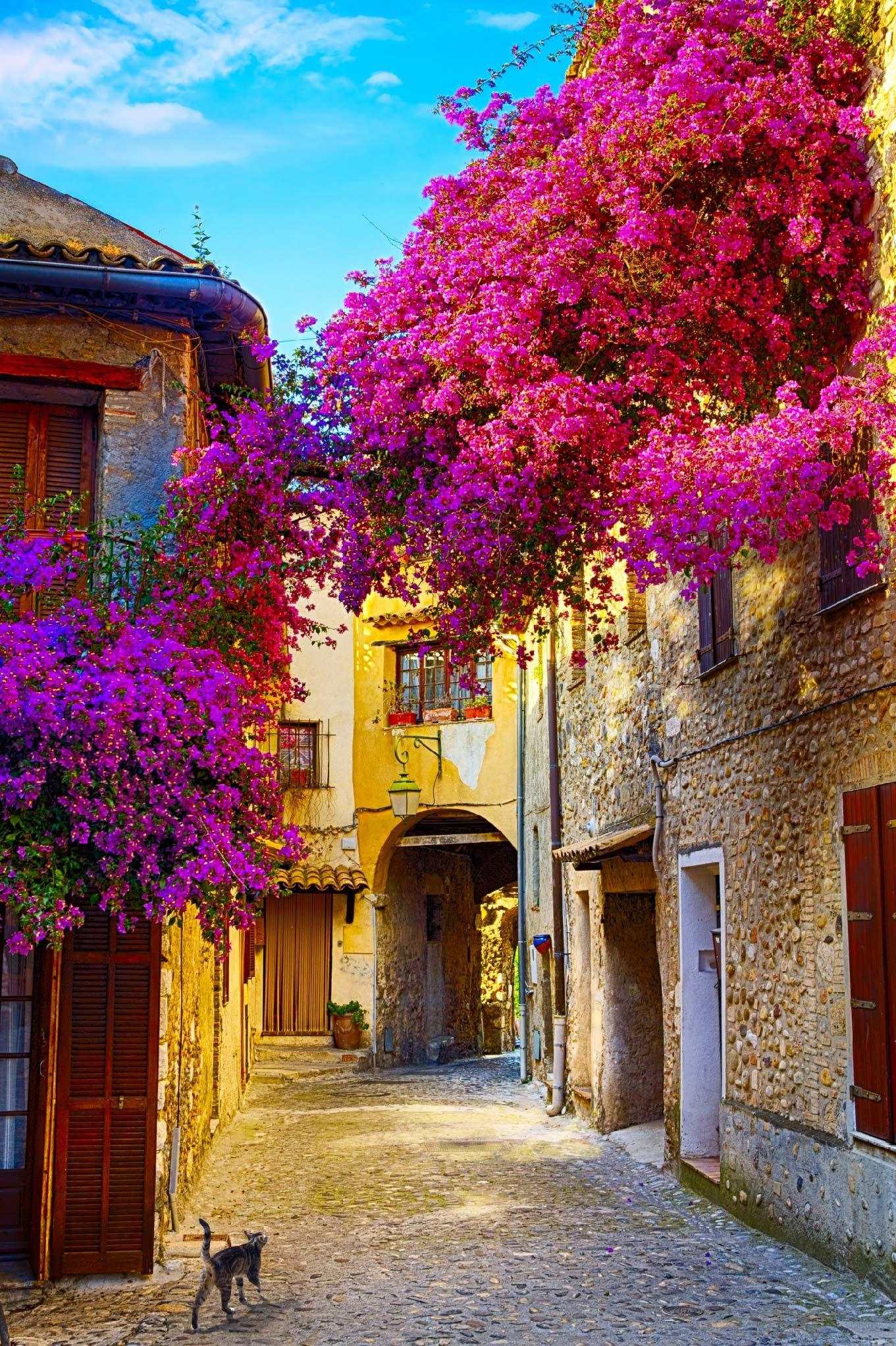 Papel mural old town of Provence, calles floreadas