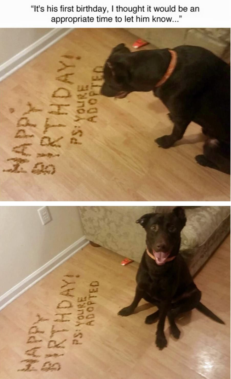 So lucky to be adopted!! Happy Birthday! http//www