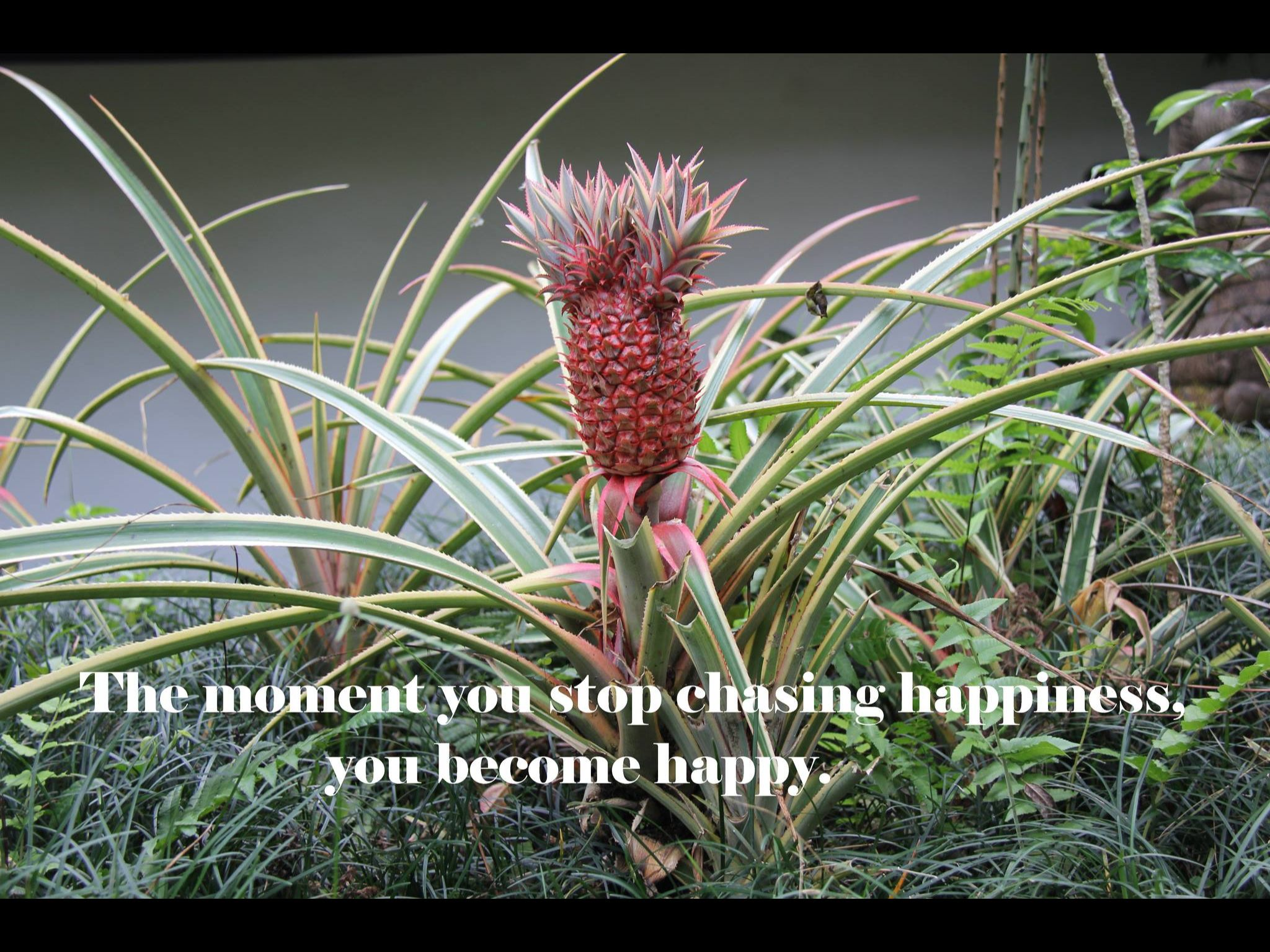 The moment you stop chasing happiness, you become happy.