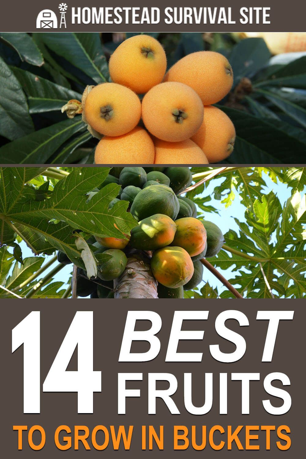 10 Fruit Trees You Can Easily Grow In A Pot Or Container Fruit Trees Fruit Trees In Containers Apricot Tree
