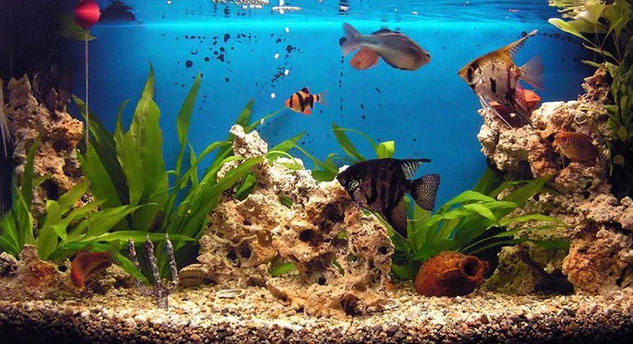 Fond D Ecran Aquarium Qui Bouge Tropical Fish Colorful Fish Aquarium