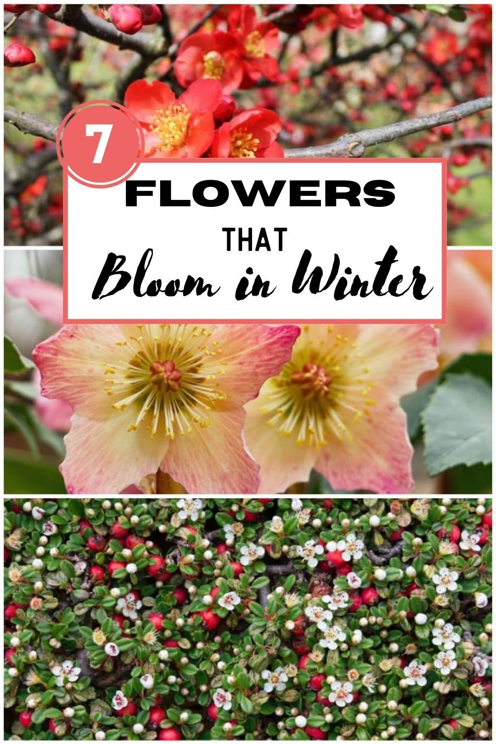 7 Colorful Flowers That Bloom In Winter Flowers Bloom Container Herb Garden