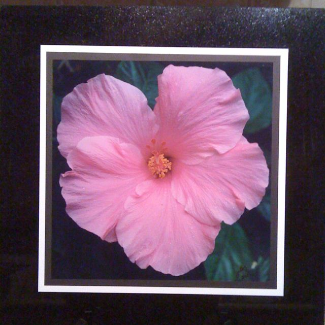 Hibiscus photo on tile