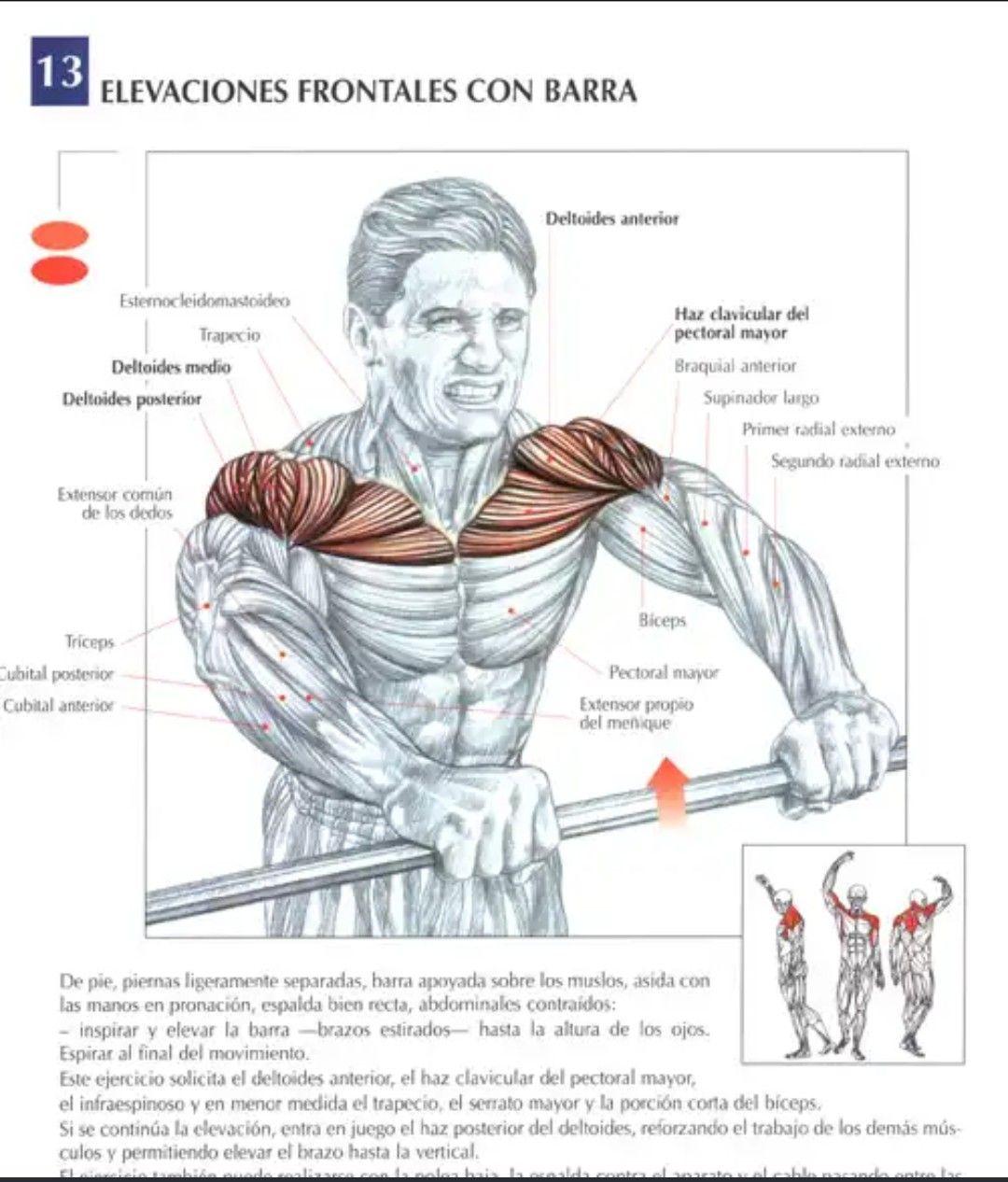 Pin De Victor Mata En Anatomía Gym Ejercicios Hombro Ejercicios Ejercicios De Entrenamiento