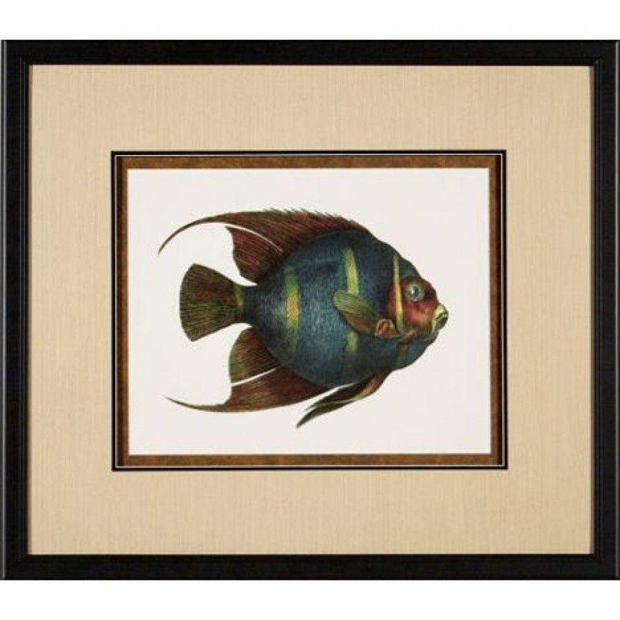 Phoenix galleries tropical fish framed print hp tropical