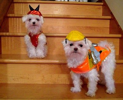 Maltese Puppies Dressed Up For Halloween So Cute Puppy Costume