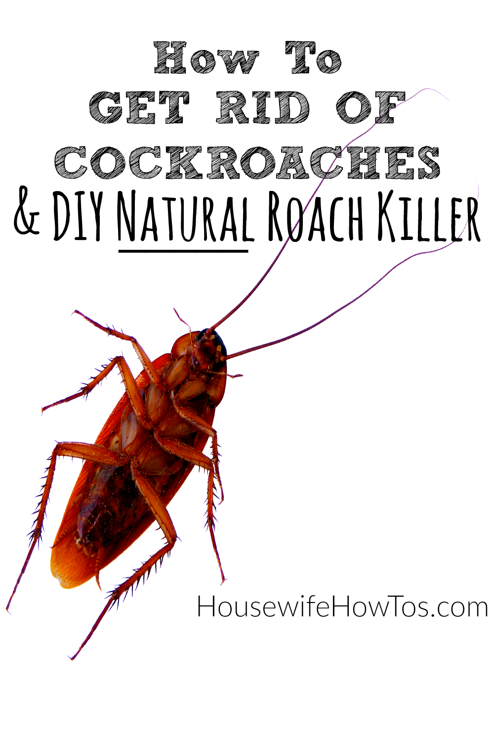 follow these steps, and use the diy natural roach killer recipe, to