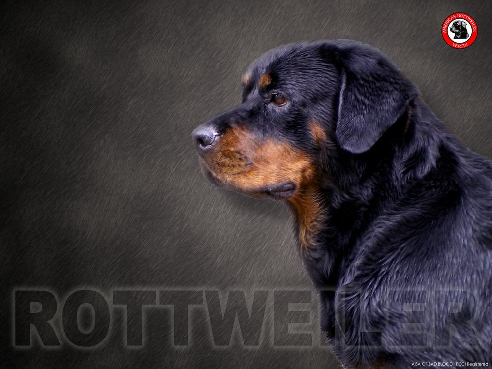 Pin By Dhruv Gupta On Rottweiler Wallpapers