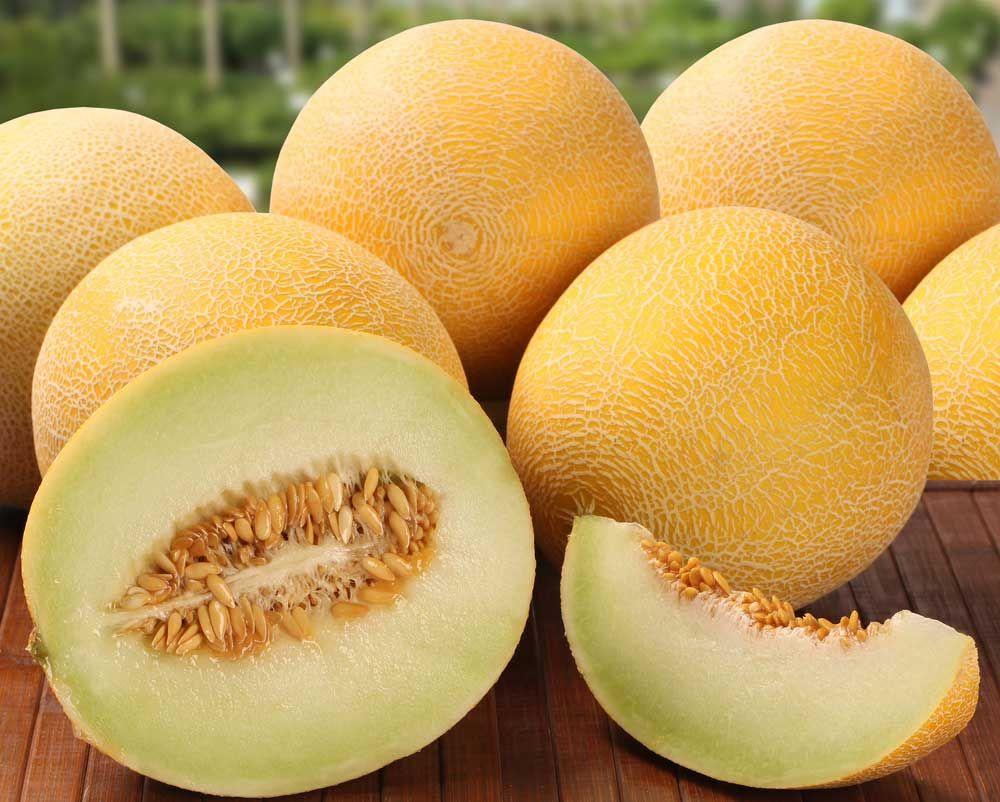 فاكهة الشمام لمواجهة موجات الحر وهذه هي المنافع Honeydew Melon Benefits Honeydew Melon Melon Benefits