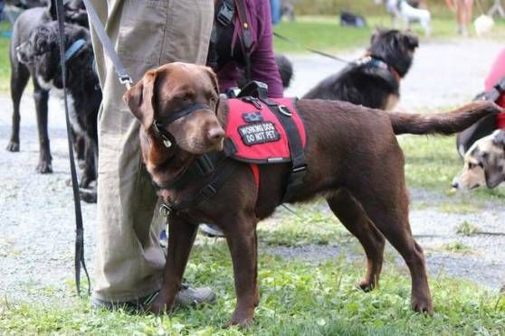 Pin On How Service Dogs Help