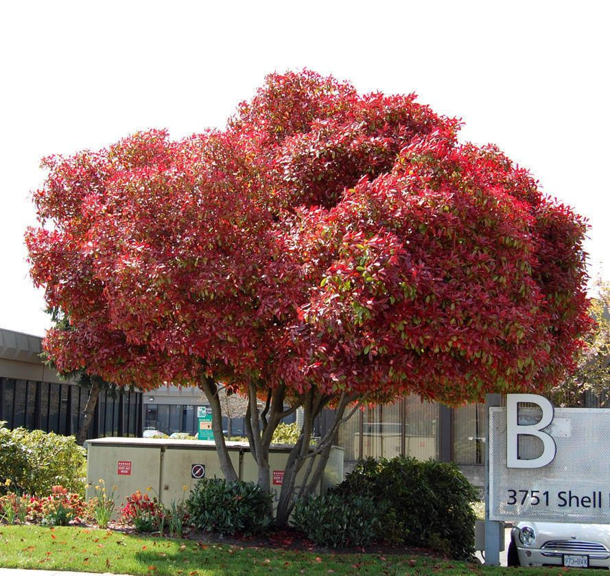 Best Trees For Front Yard Curb Appeal