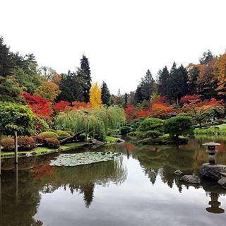 Fall Reflections #seattle #autumn #fallleaves #japanesegarden