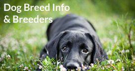 Dog Breed Information Dog Breeders Dog Breeder Dogs Dog