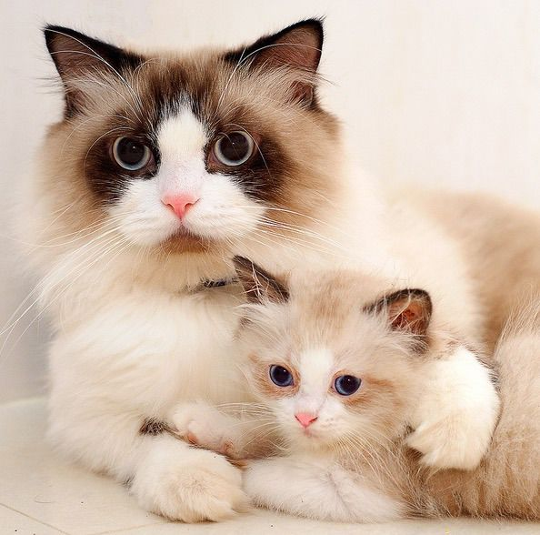 Love this pic, what a beautiful mama cat.