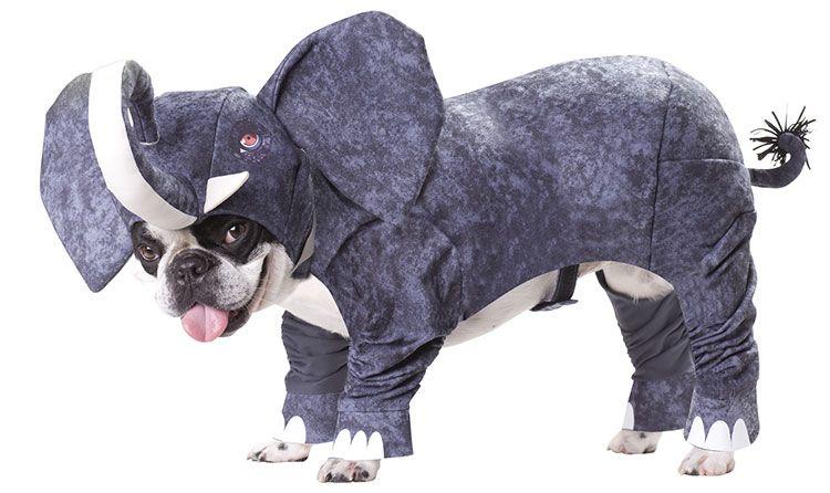 Elfelant Ropa Para Perros Animales Graciosos Perros