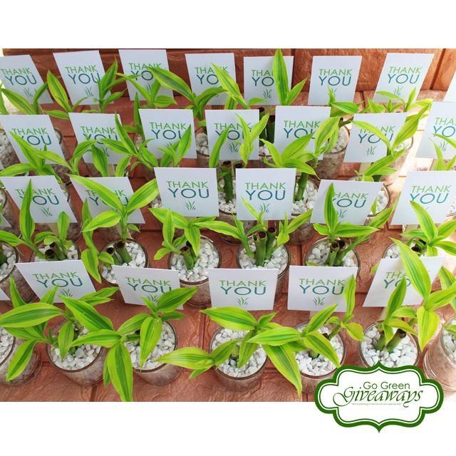 Wedding Theme Ideas Philippines: Wedding Favors, Ecowraps, Succulents With Lace, Succulents