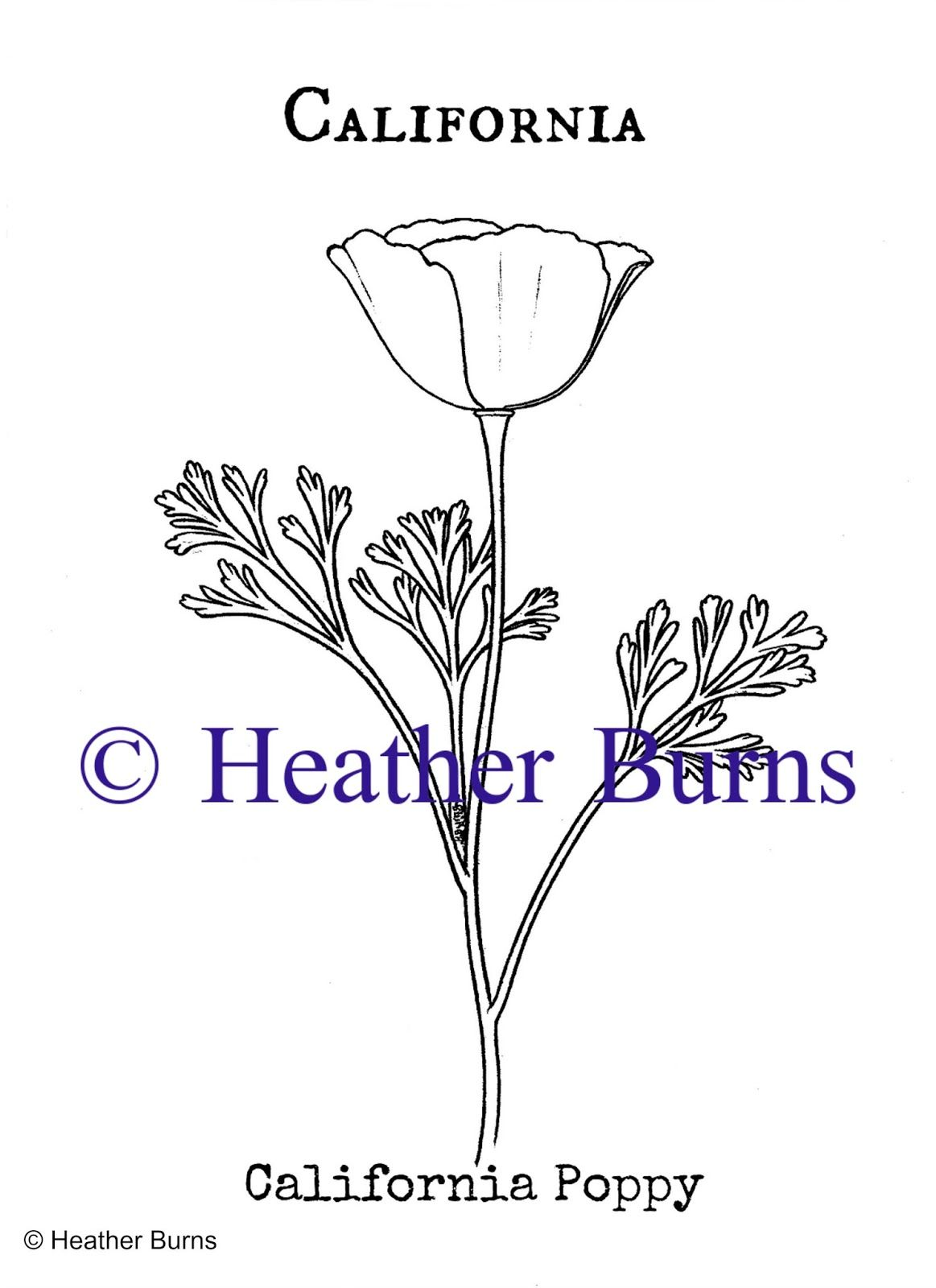 California poppy coloring state flower coloring book pinterest california state flower poppy coloring page biocorpaavc Gallery