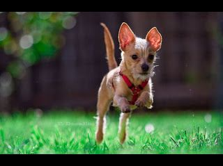 New Year S Resolution How To Slim Down With Your Pet Http Www Pawsforreaction Com Slimdown Html Pet Odors Pet Urine Pet Stains