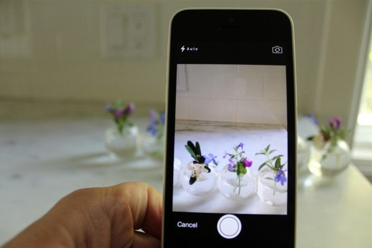 Plantifier A Gardening App To Id Plants Amazing Gardens Garden