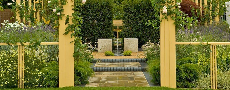 Картинки по запросу Ginkgo biloba in the garden