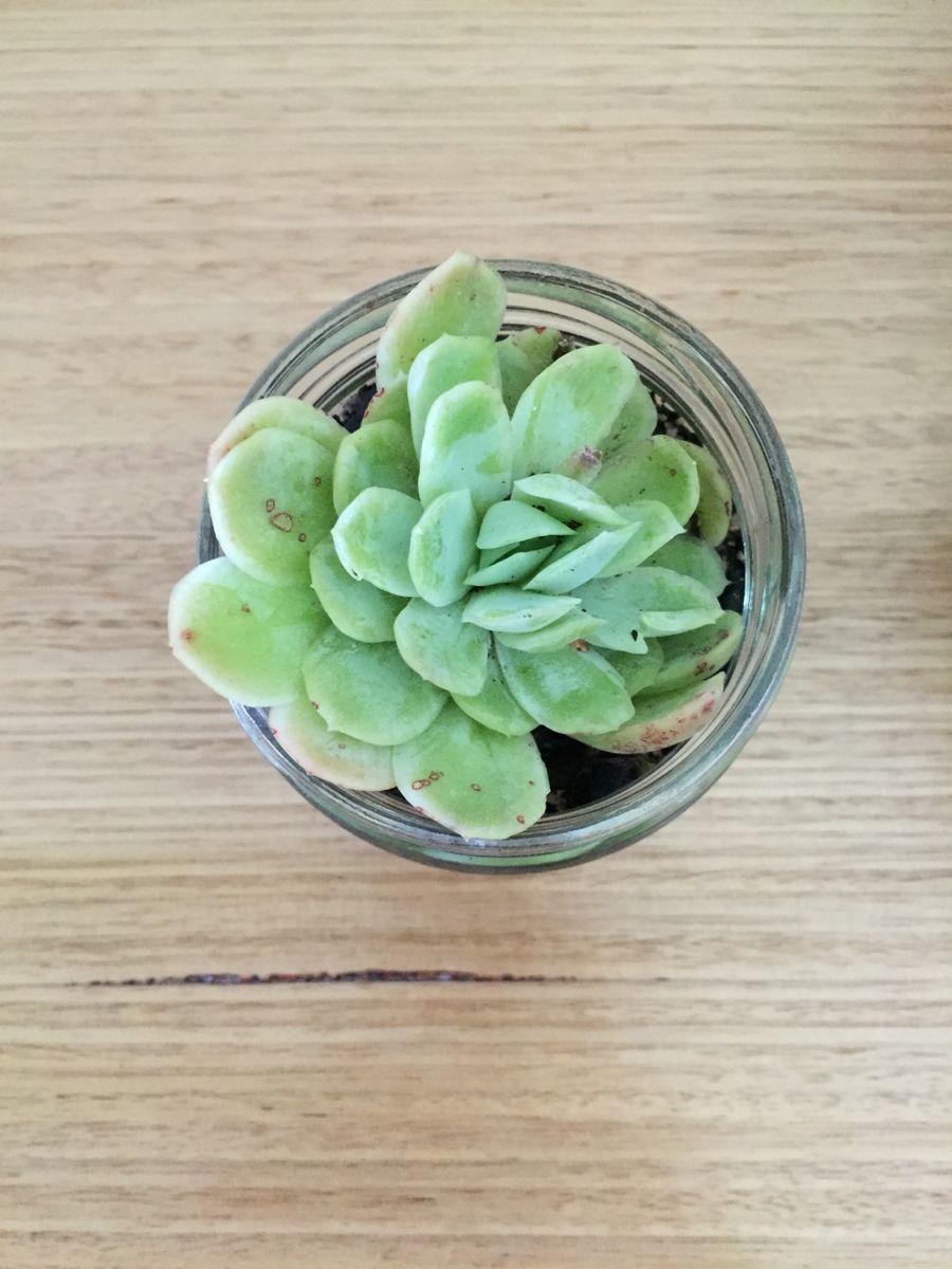 #succulents #indoorplantsdecor #plants #nature