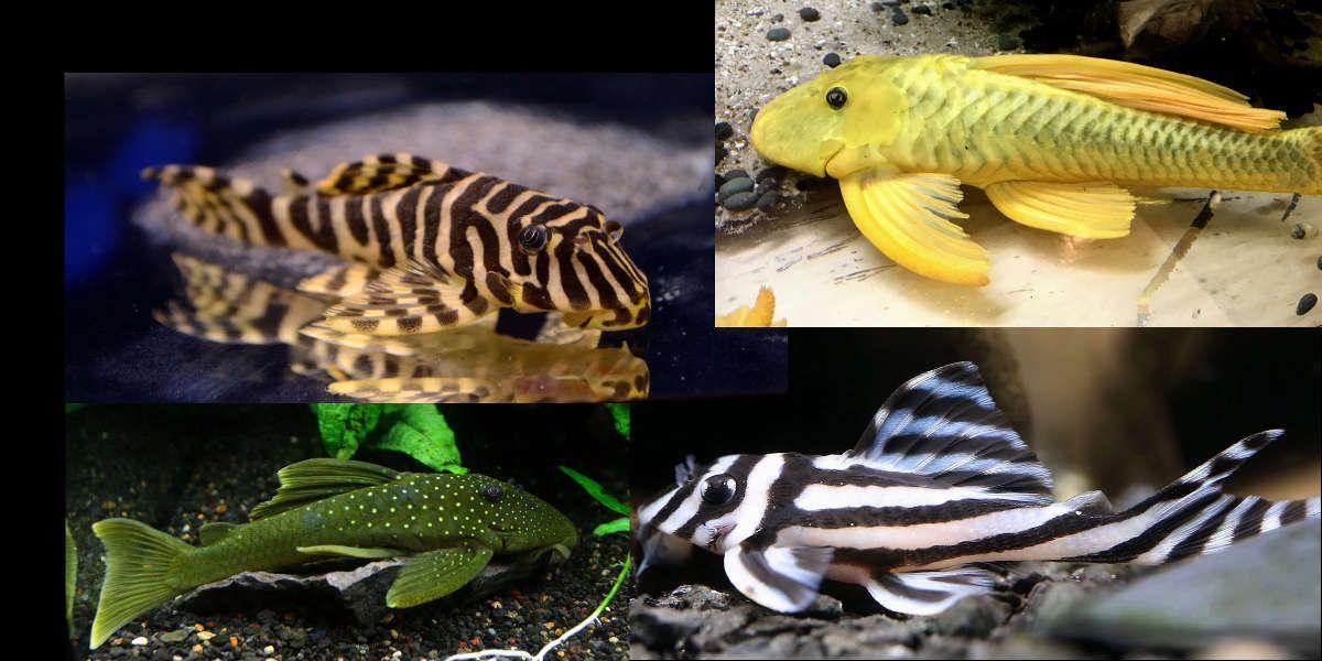 Pin On Aquariums Fish