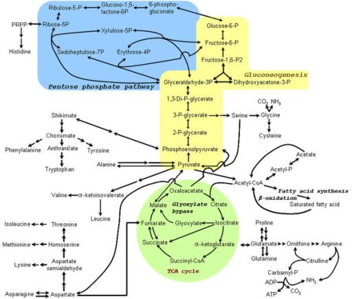 how to study biochemistry in medical school