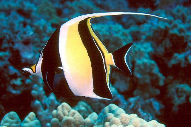 أجمل 10 أسماك ملونة في عالم البحار بالصور Colorful Fish Marine Fish Beautiful Fish