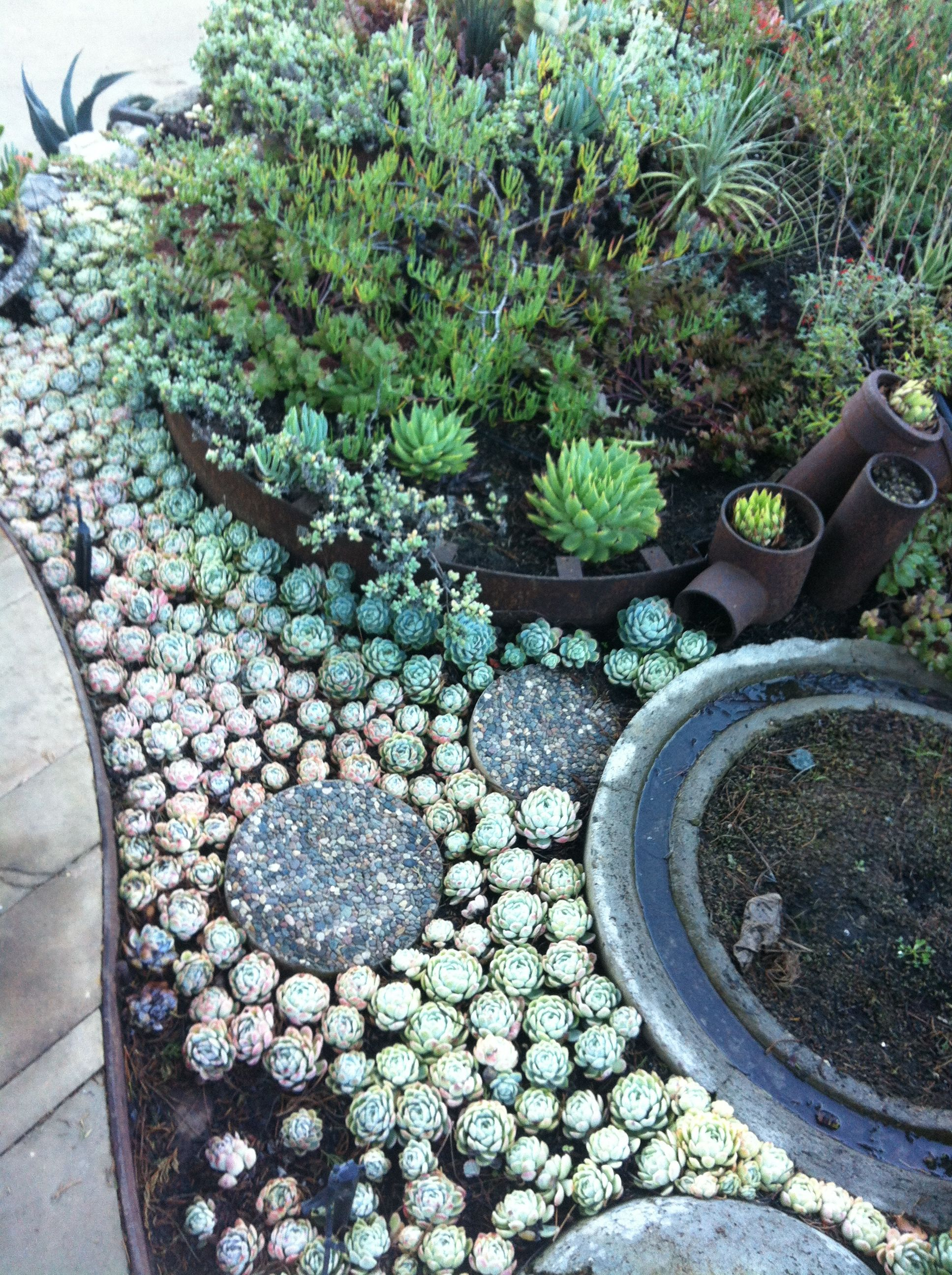 Ordinaire Love This Succulent Garden Layout.