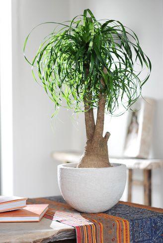 Bäume für alle | Architektur | Zimmerpflanzen, Pflanzen und ...
