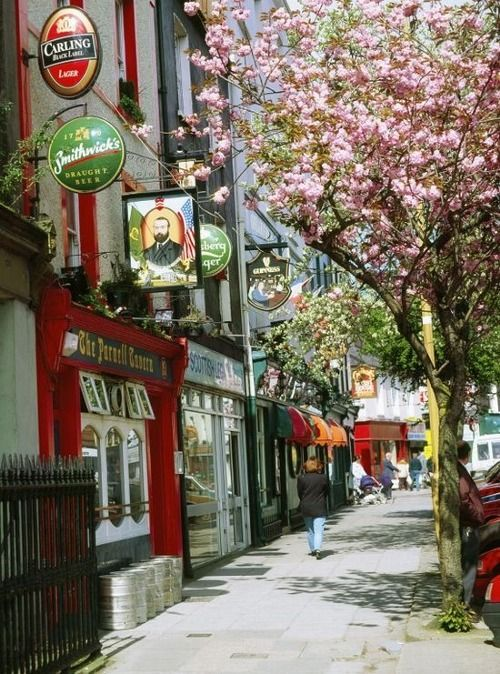 Cork Ireland City Street With Pretty Pink Blossoms On The Trees Places Republic Of Ireland Ireland Travel