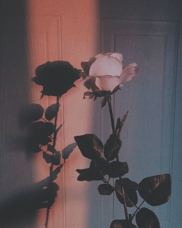 "A E S T H E T I C � on Instagram: ""Do you love flowers️?? • • • • #aesthetic #aesthetictumblr #aestheticedit #aestheticoutfit #aesthetically #aestheticfashion #aesthetics…"""