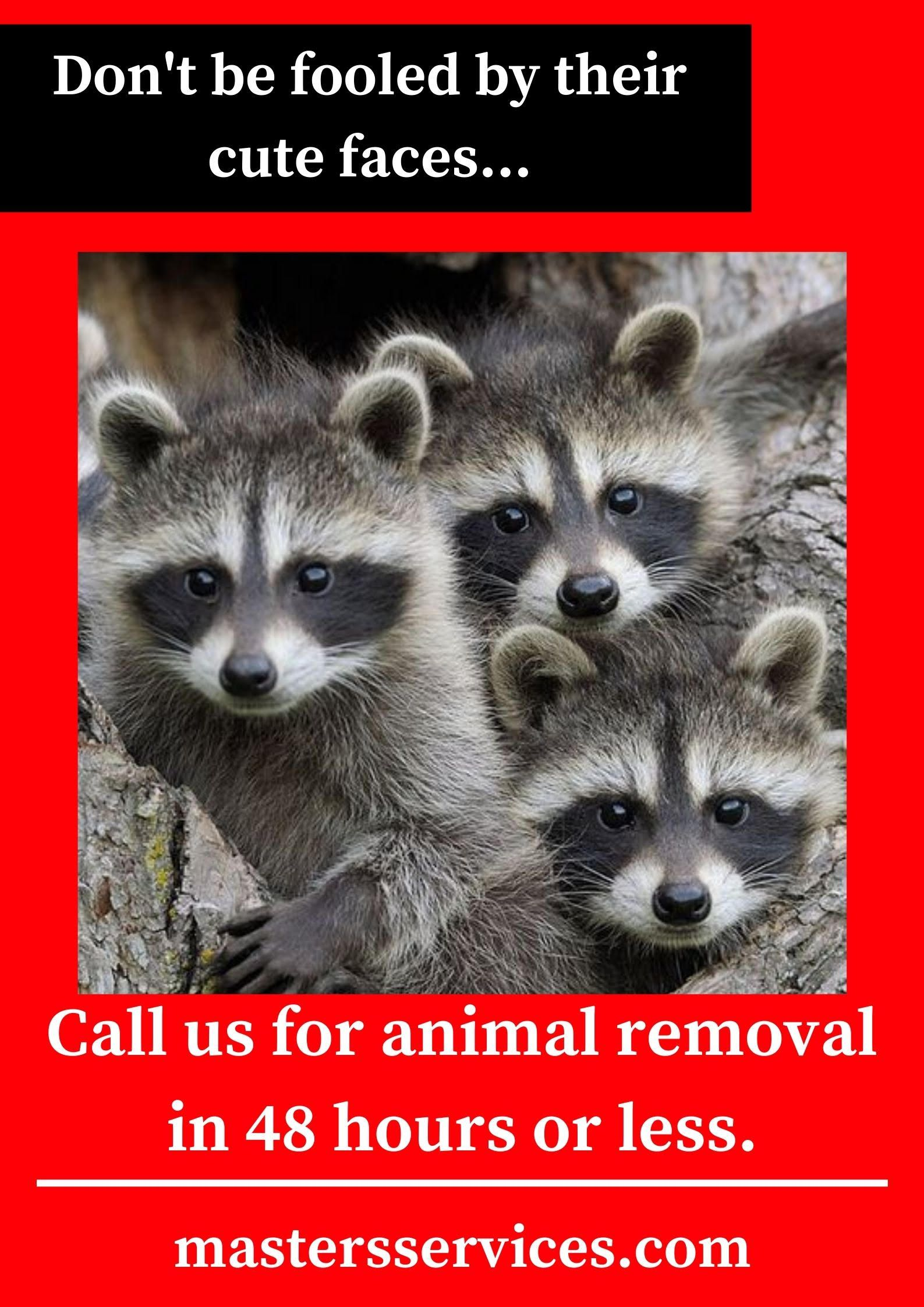48 Hour Wildlife Removal in 2020 Wildlife, How to remove