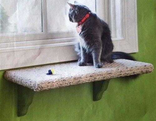 estante ventana gato tela